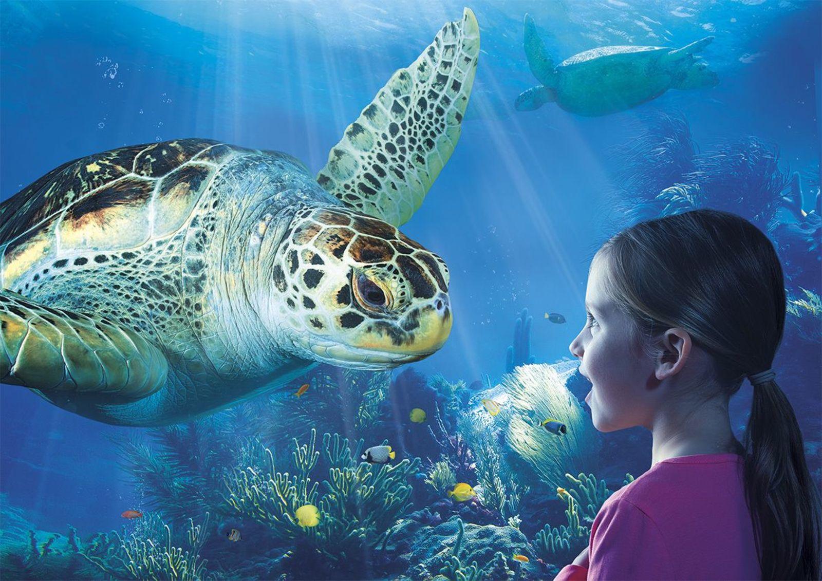 Sea Life Arrangement Zeebrugge