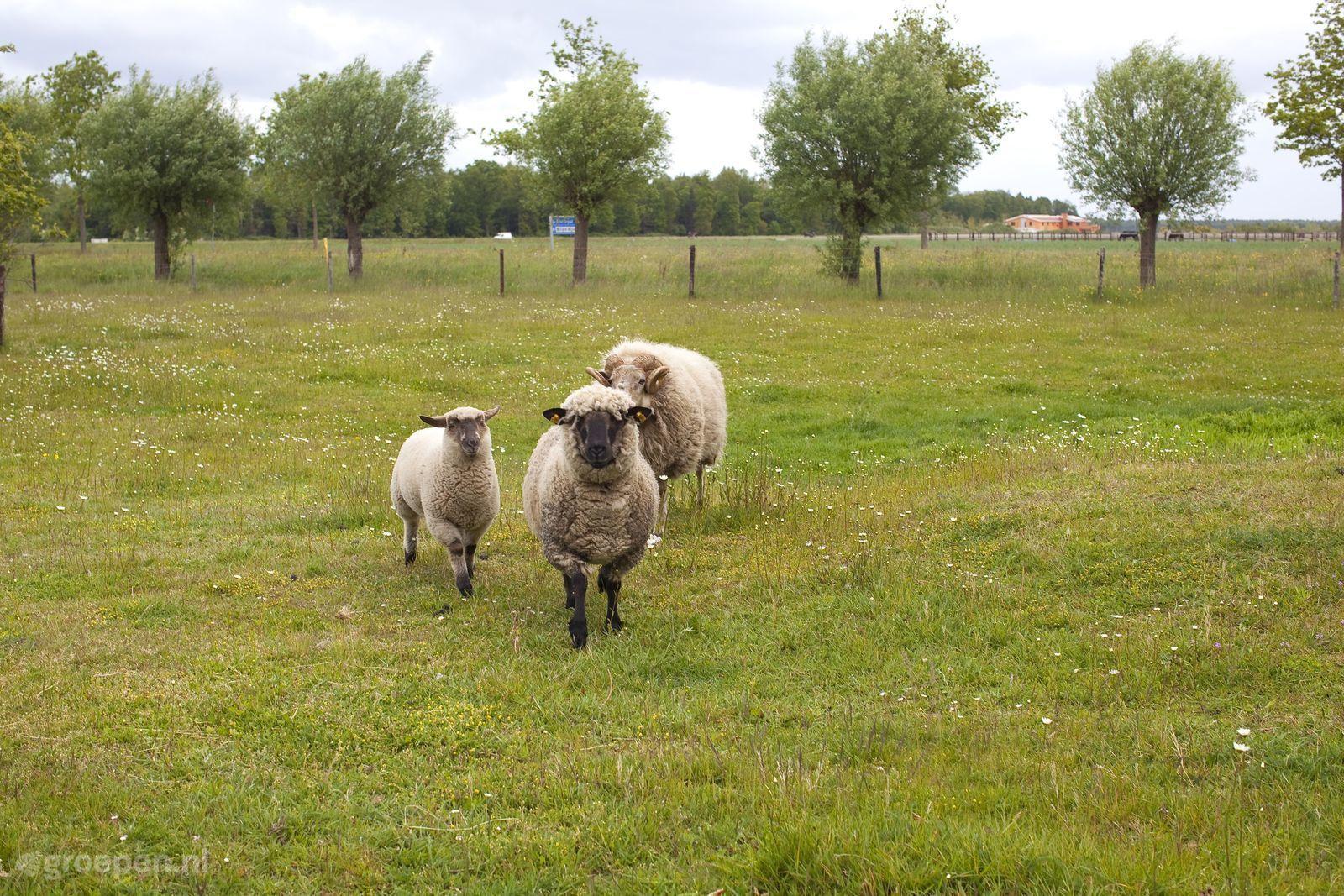 Bant Ban 1531 16 Personen Flevoland Niederlande Gruppenurlaub