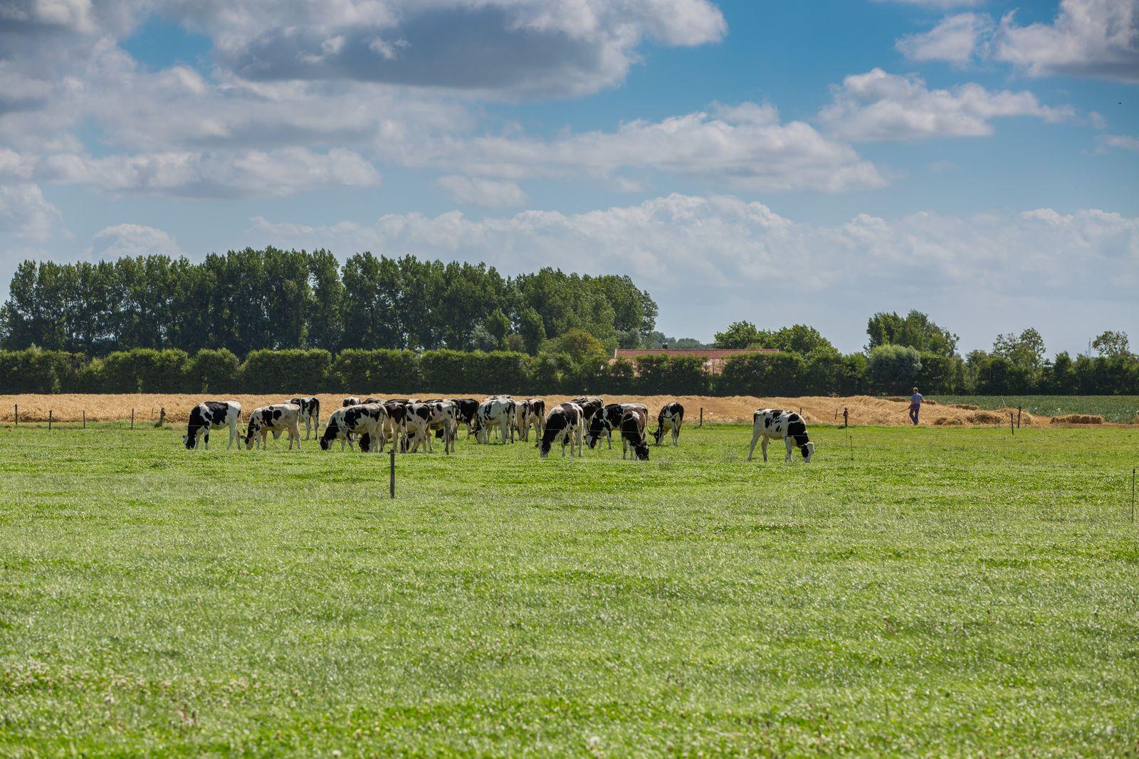 Image de Oostkapelle - Maison de ferme 8 Personnes