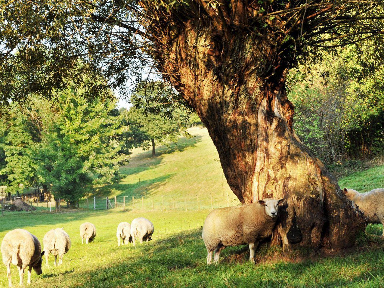 Afbeelding van Landgoed Boukai Moulin - luxe vakantievilla voor groepen