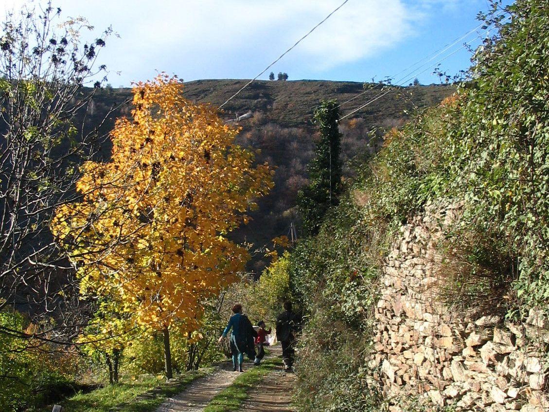 Afbeelding van Cevenolse Mas gîte Verdier - vakantie vieren middenin de natuur