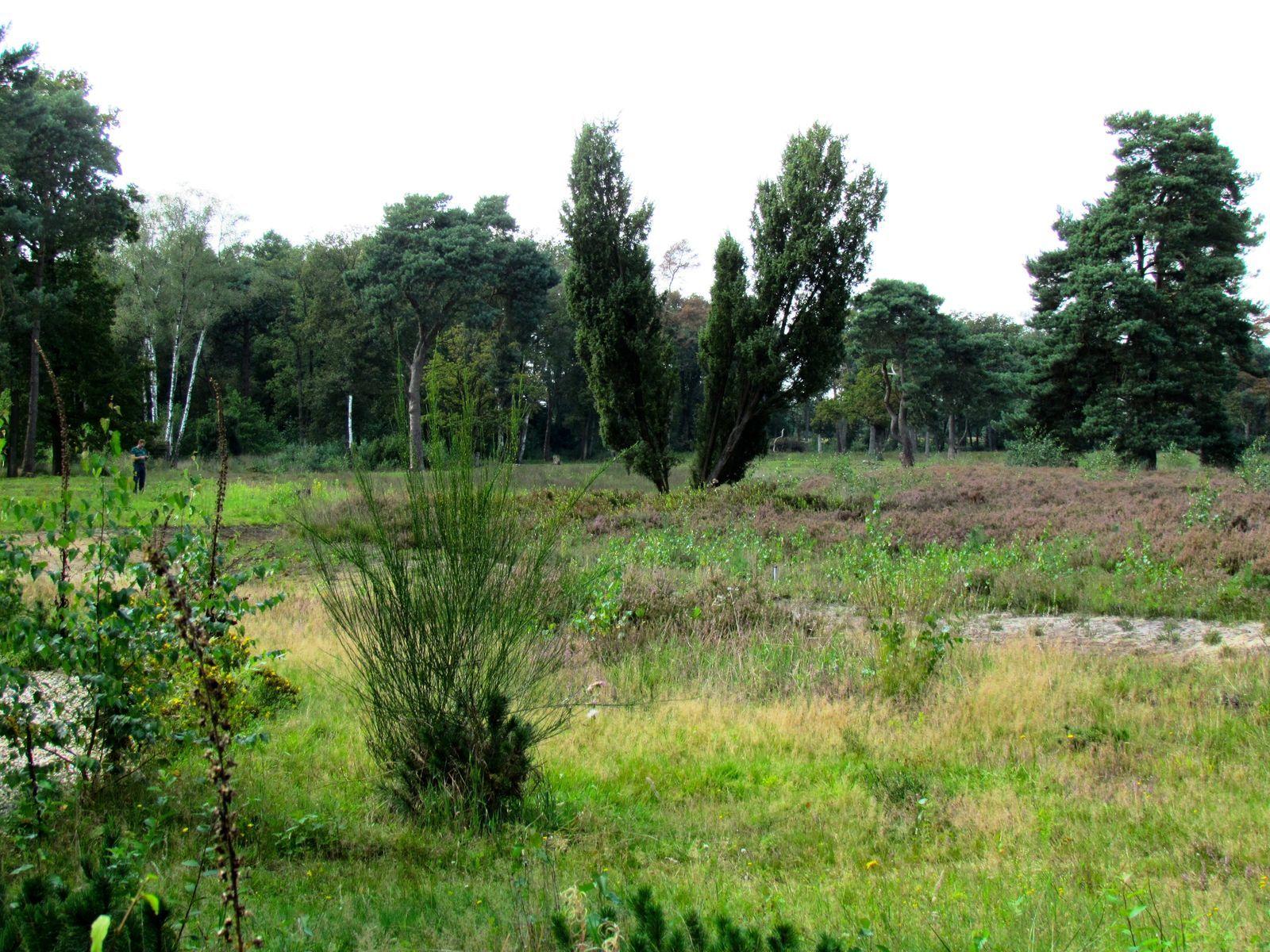 Buitenplaets de Heide Woonhuis & Kapschuur groepshuis voor 22 personen