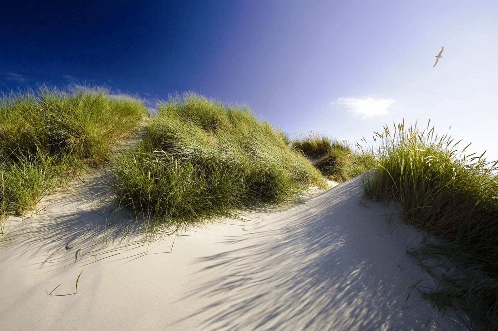 Afbeelding van Texels Landleven - duurzaam en luxe vakantiehuis voor groepen