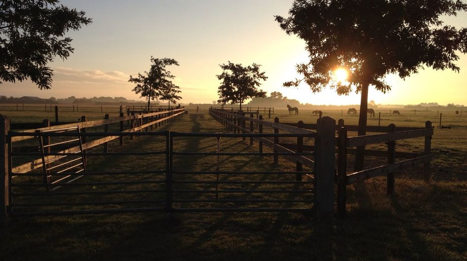 Show foto weilanden ochtend zon