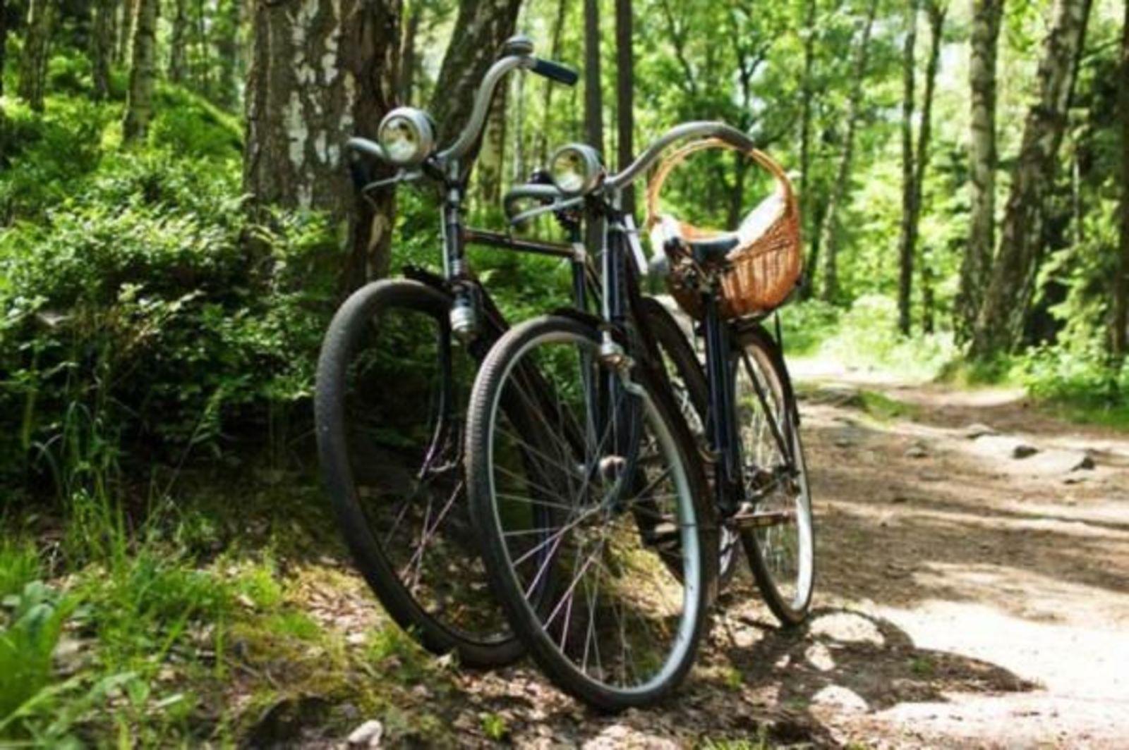 Ontdek de Maashorst per fiets