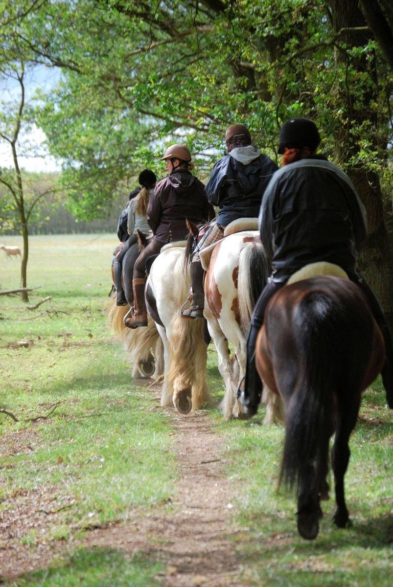 Trek de Maashorst in met je paard