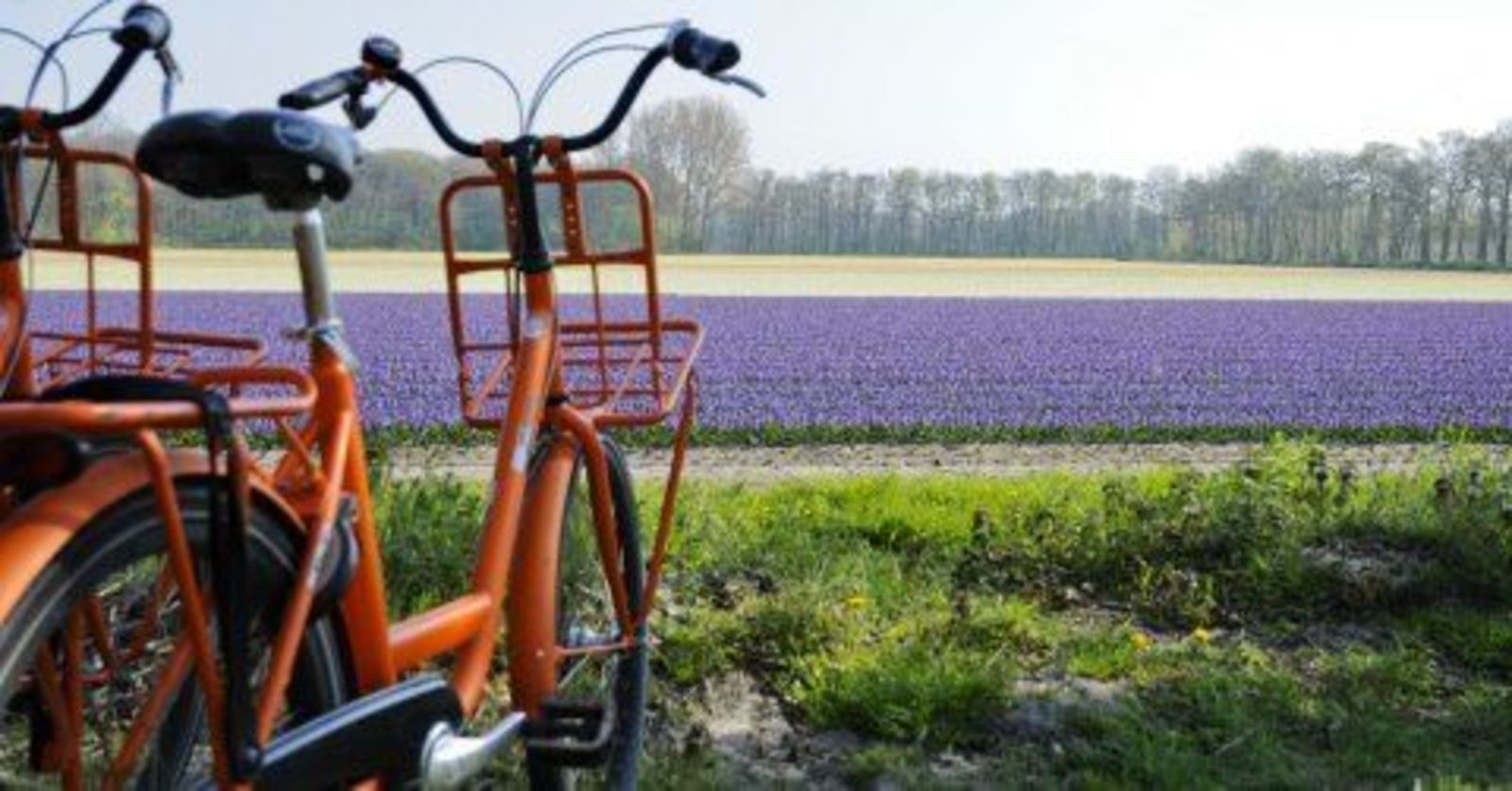 Biking in the Bollen region
