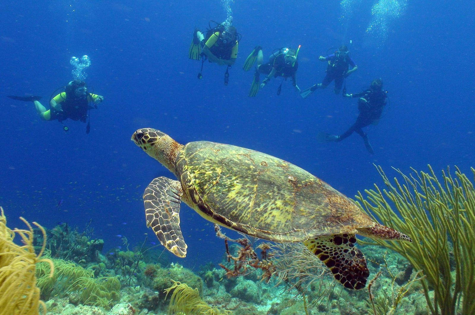 Dive into Winter - Lanais Deluxe - 5 days 2 tank boat & unlimited shore diving